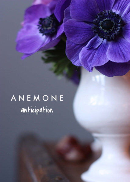 anemone means anticipation | talking flowers - A Valentine's Day Guide to Flower Meaning