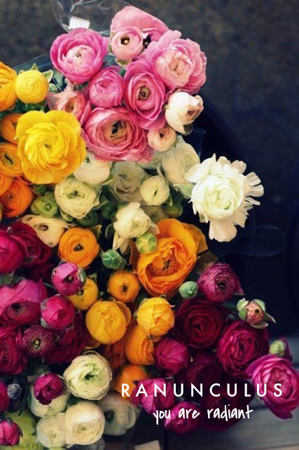 Ranunculus means you are radiant | talking flowers - A Valentine's Day Guide to Flower Meaning