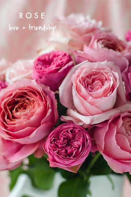 rose means love or friendship  | talking flowers - A Valentine's Day Guide to Flower Meaning