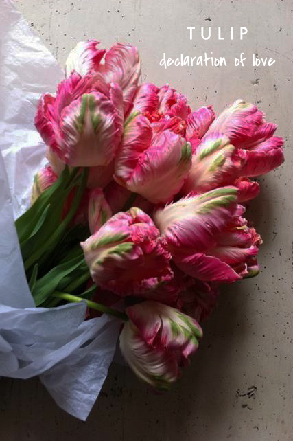 tulip means declaration of love | talking flowers - A Valentine's Day Guide to Flower Meaning