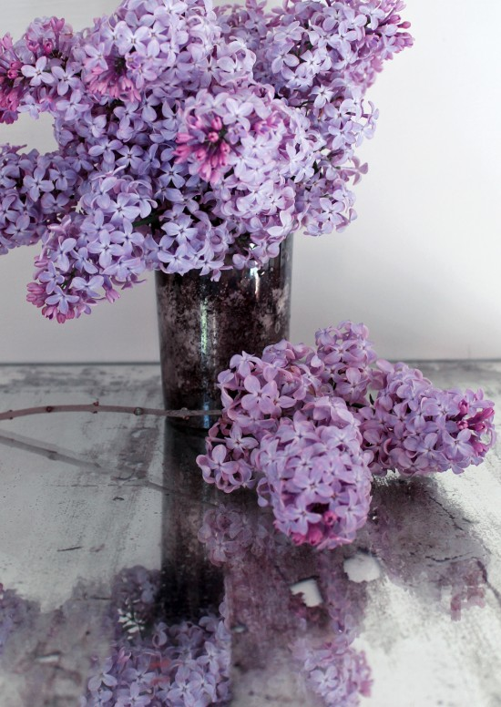 Lilac Blooms - Making Lilac Sugar with Finding Shibusa